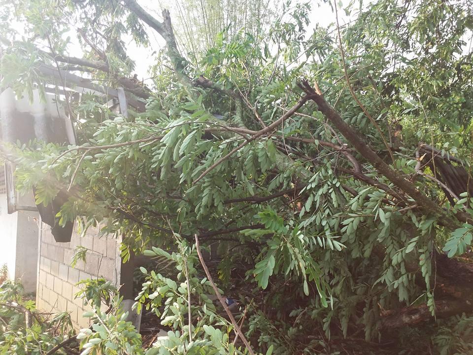 พายุฝนกระหน่ำบ้านร้องตีมีด_5