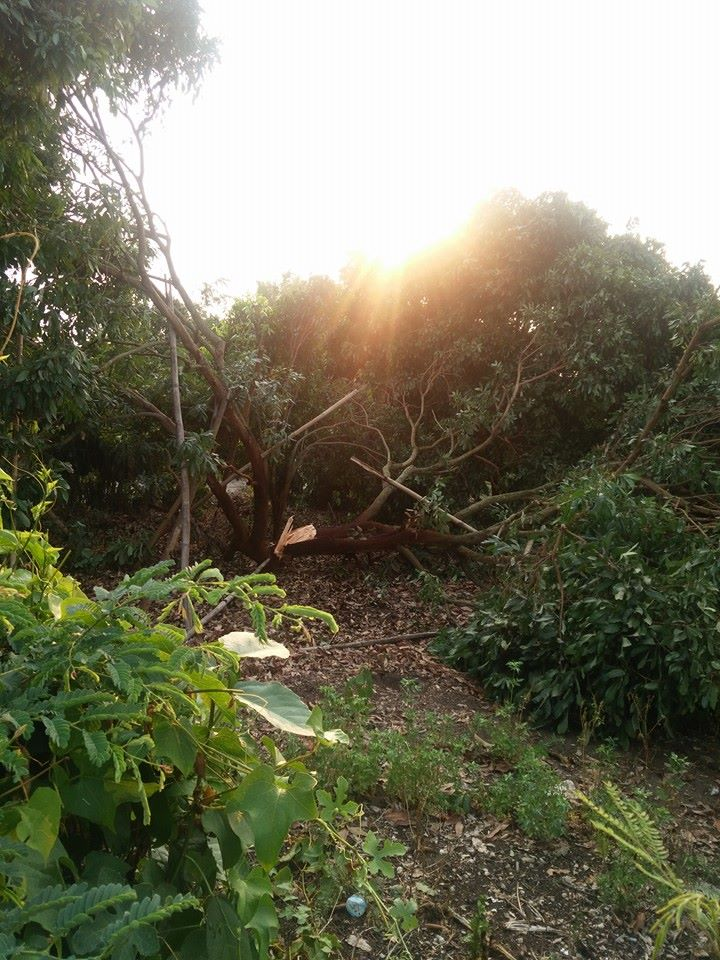 พายุพัดสันป่าตอง4พค_3