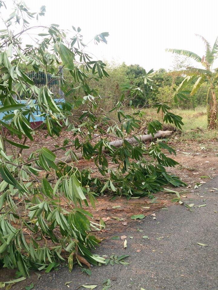 พายุพัดสันป่าตอง4พค_4