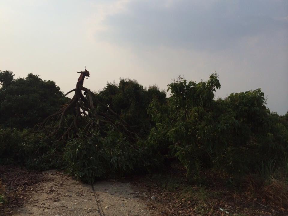 พายุพัดสันป่าตอง4พค_9